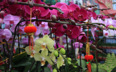 Lucky flowers and plants for Chinese New Year