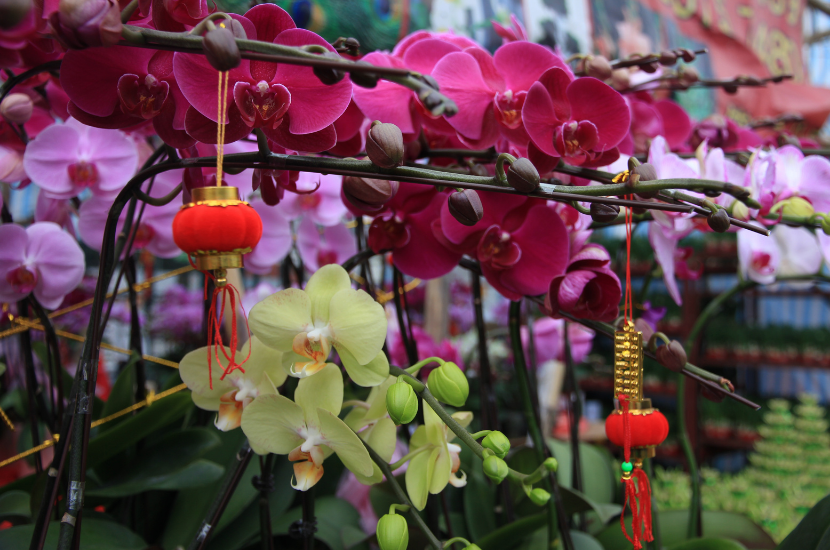 Auspicious Chinese New Year Flowers and Plants