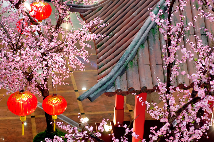 Peach blossom a lucky Chinese New Year flower