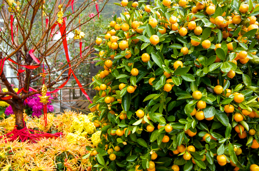 Best plant decorations for Chinese New Year